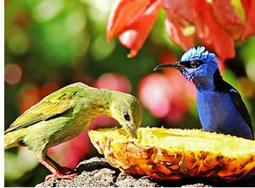 Vogels op Boquete Garden Inn